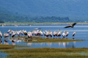lake Manyara national park 2