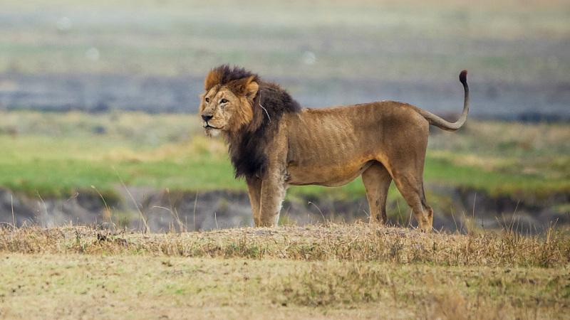 animals in ngorongoro