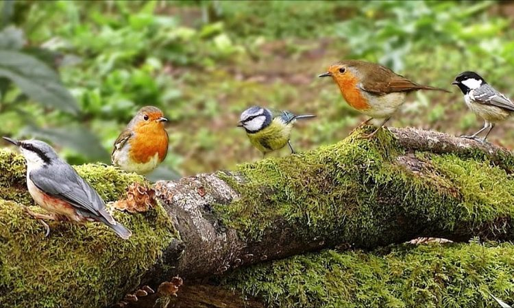 birding in serengeti national park