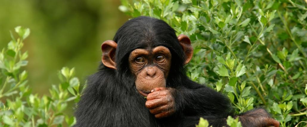 3 Days chimpanzee trekking in gombe national park