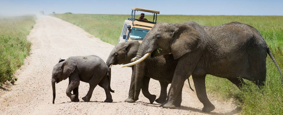 what to see serengeti national park