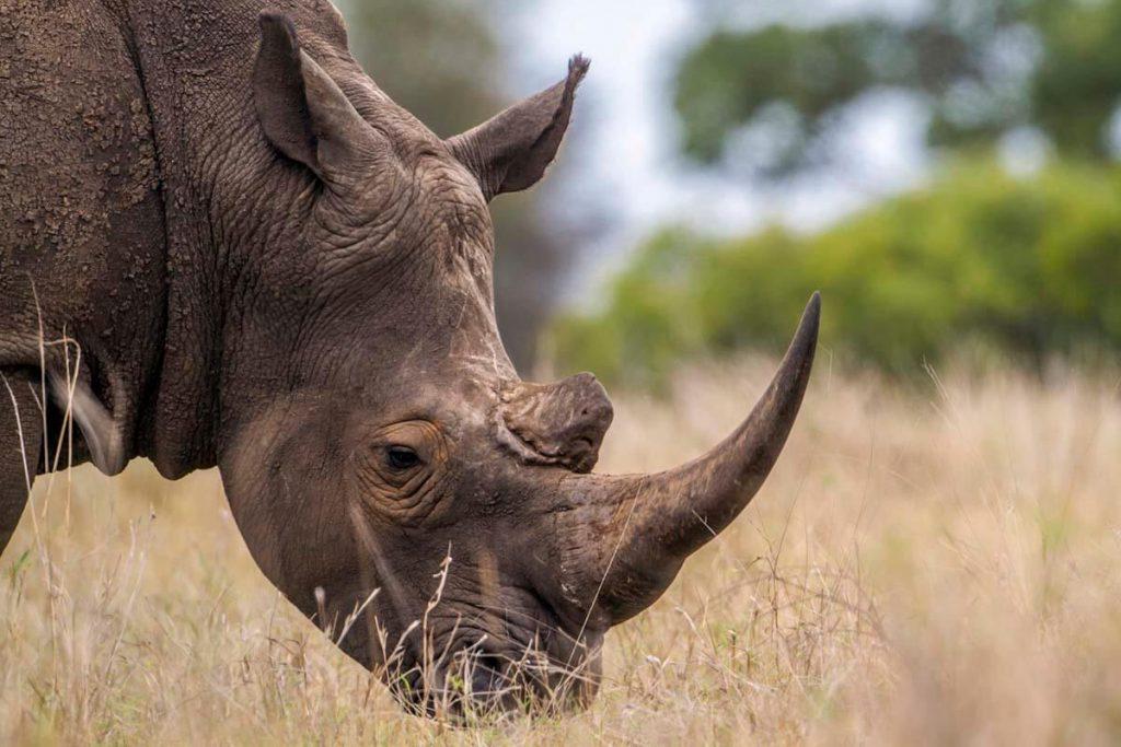 ngorongoro  crater rhinos