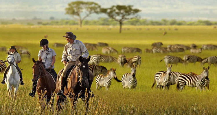 he cost of visiting serengeti national park